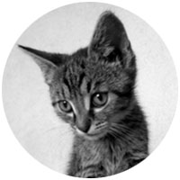 No cute kitties please